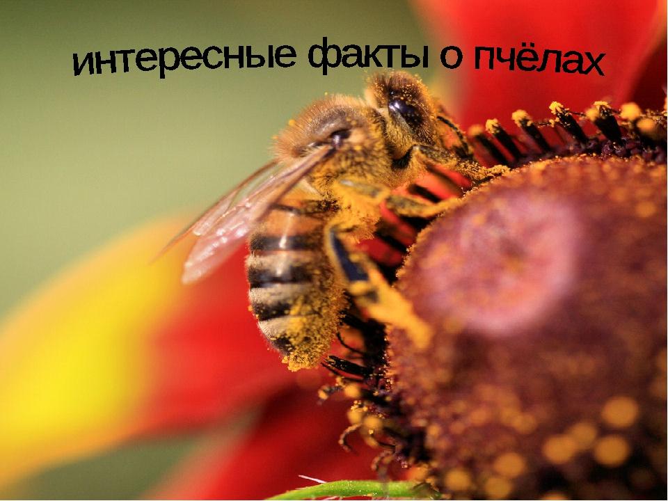 означает интересные картинки про пчел него