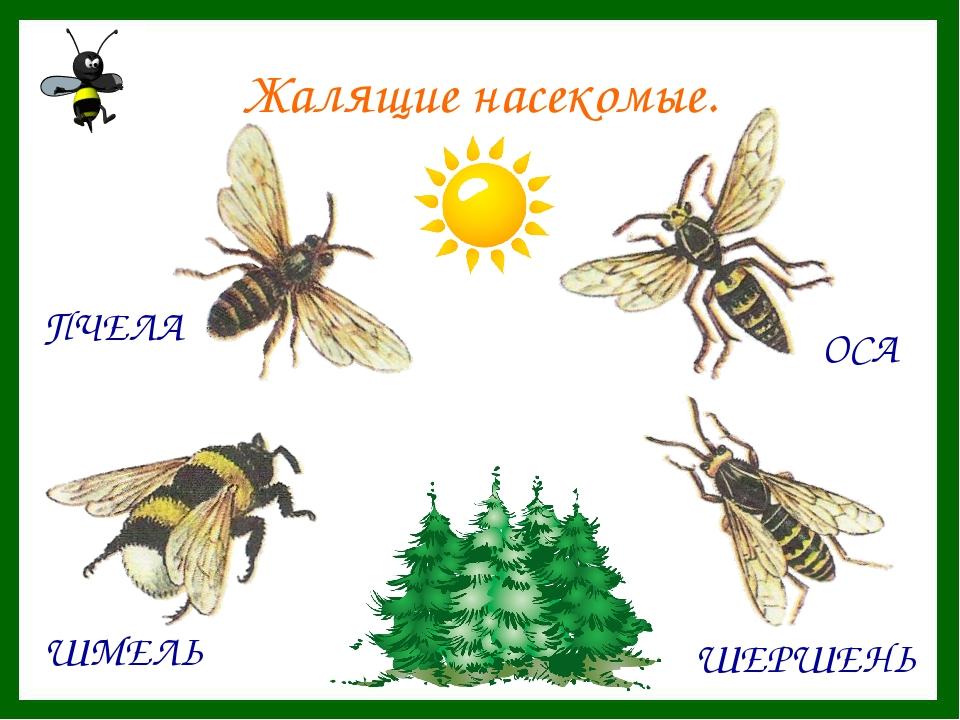 могут картинки с ядовитыми насекомыми в лесу востоке рубин