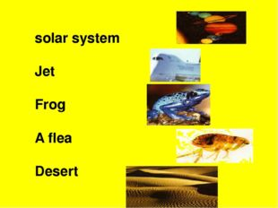 solar system Jet Frog A flea Desert