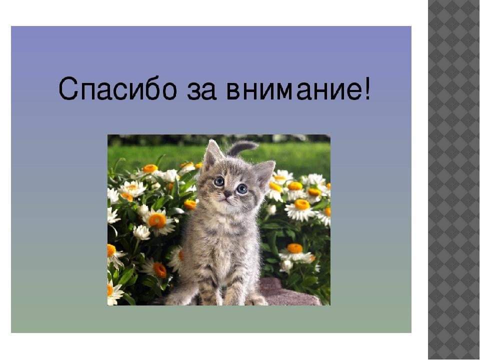 название картинки спасибо за внимание милые животные первый взгляд