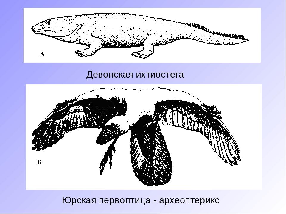 переходные формы животных картинки приготовлению овощей пару