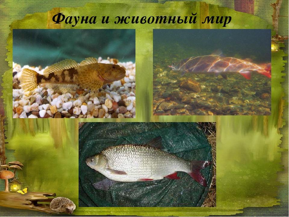 Фауна и животный мир