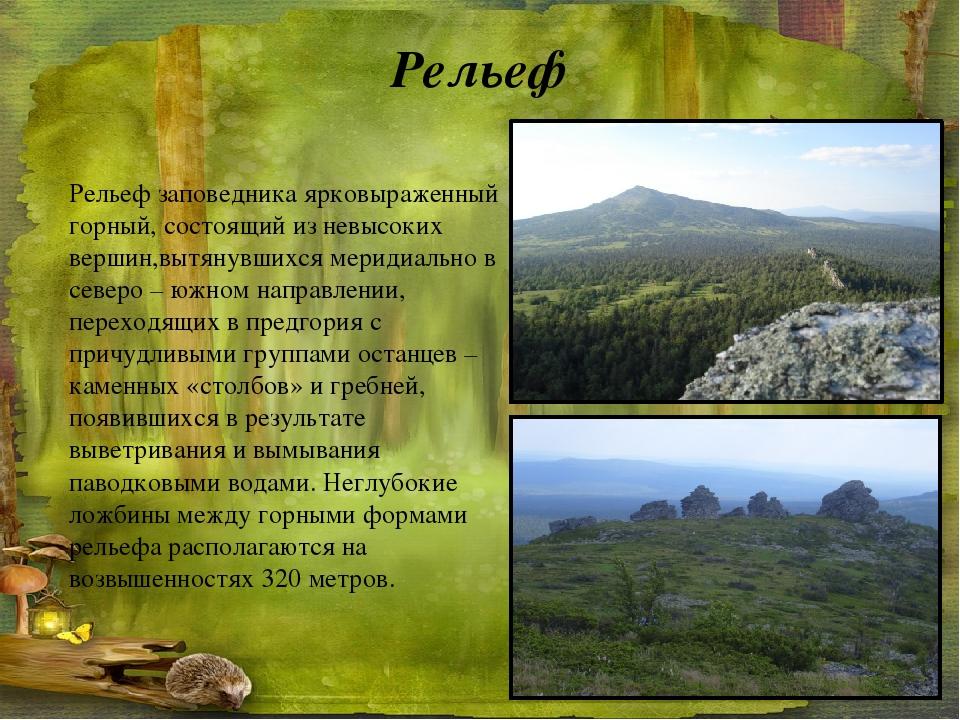 Рельеф заповедника ярковыраженный горный, состоящий из невысоких вершин,вытян...
