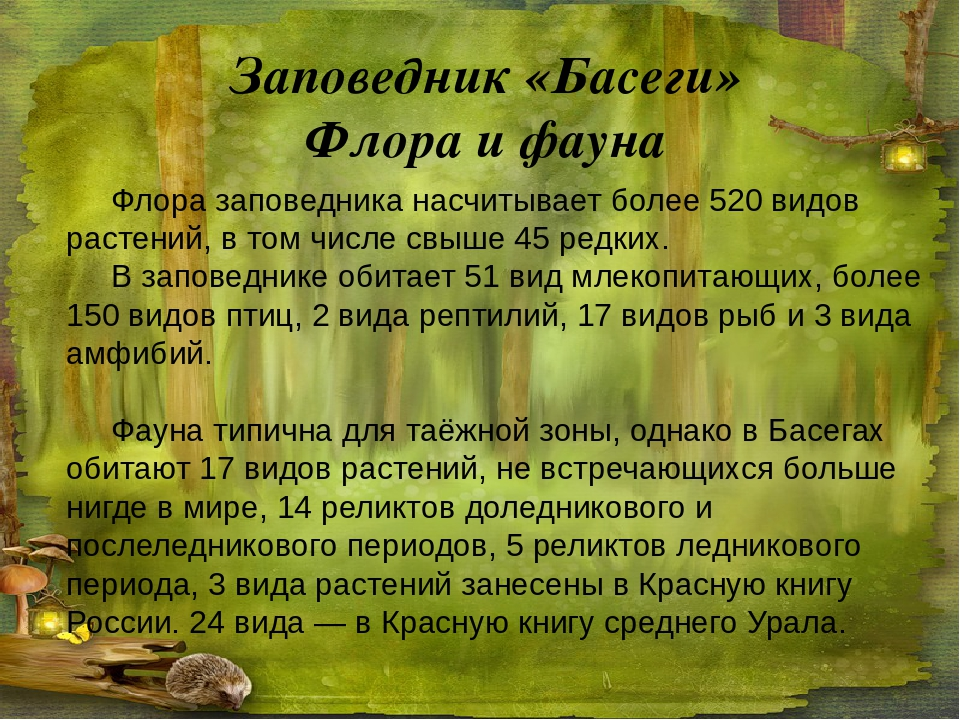 Заповедник «Басеги» Флора и фауна Флора заповедника насчитывает более 520 вид...
