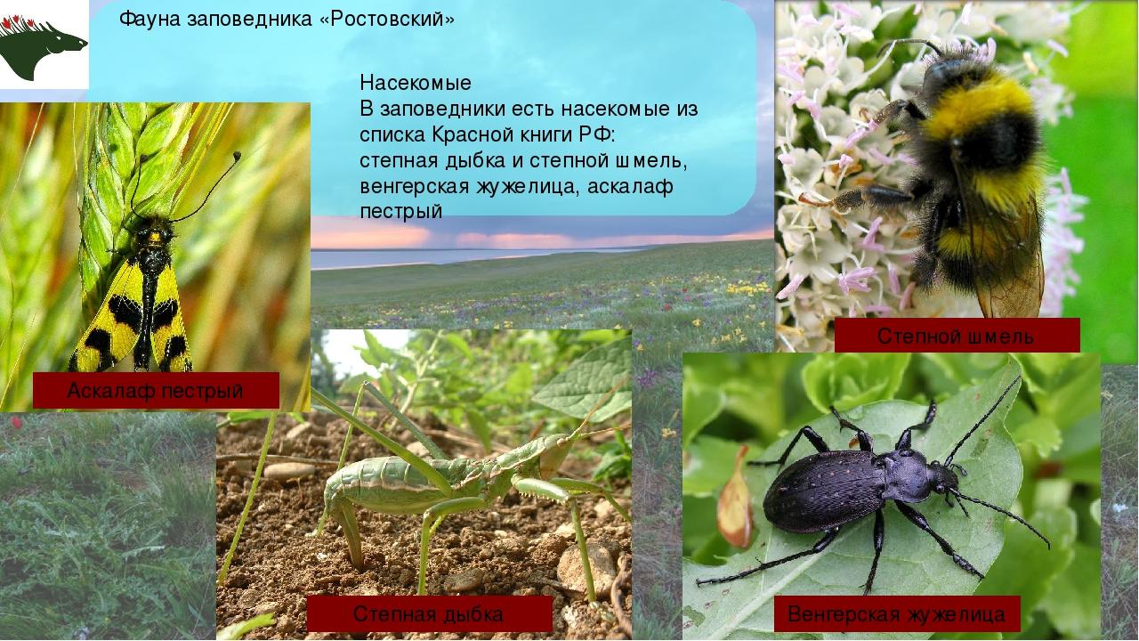 Насекомые В заповедники есть насекомые из списка Красной книги РФ: степная ды...