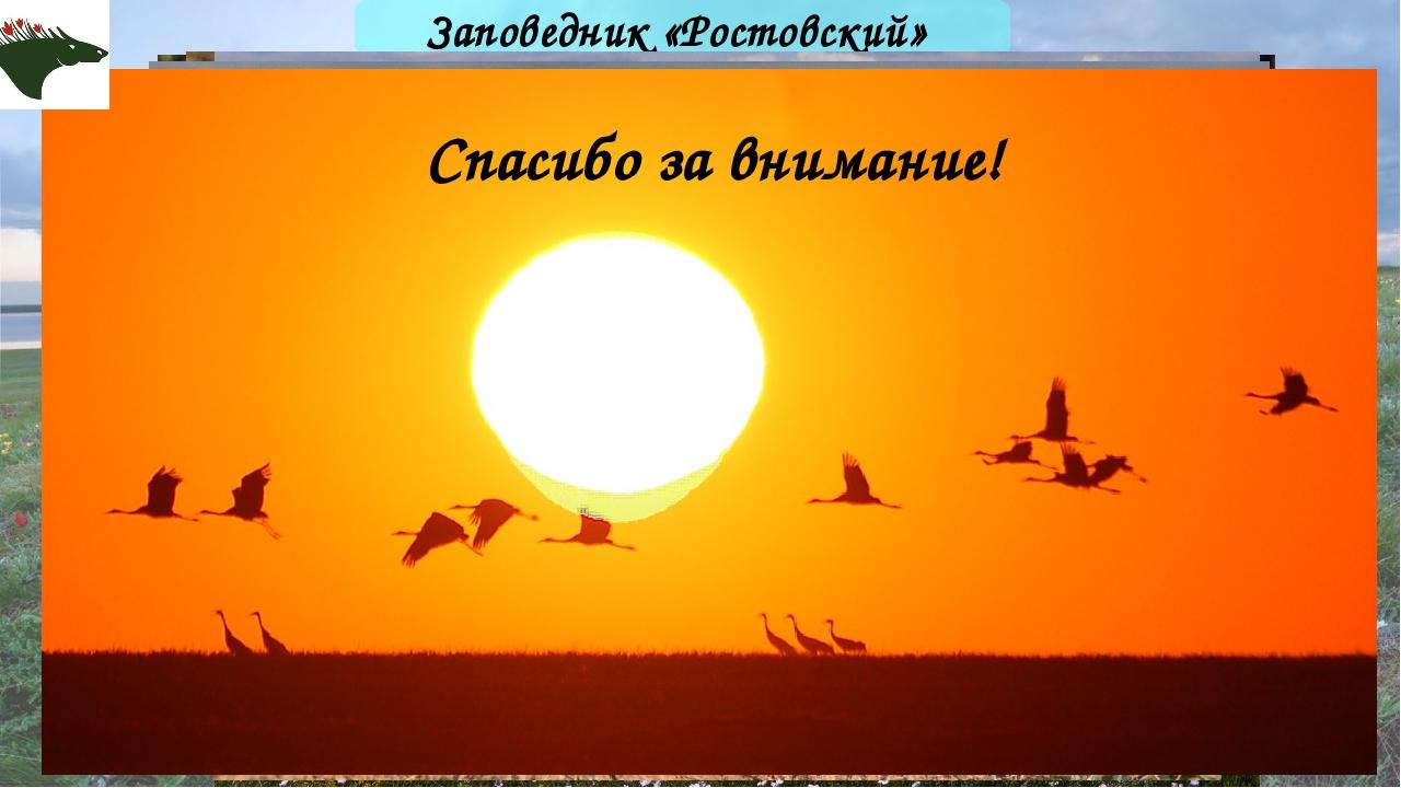 Заповедник «Ростовский» Спасибо за внимание!