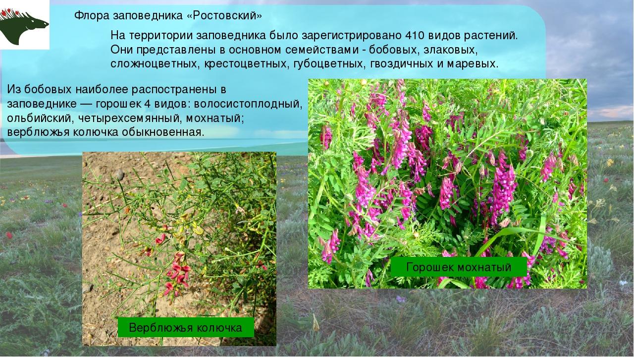 Флора заповедника «Ростовский» На территории заповедника было зарегистрирован...