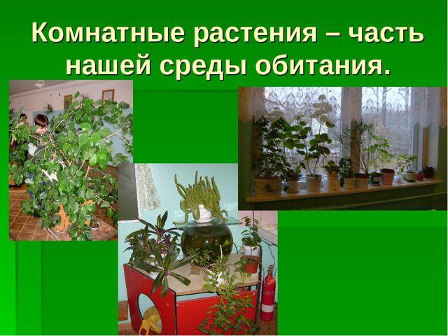 Комнатные растения – часть нашей среды обитания.