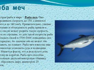 Рыба меч Самая быстрая рыба в мире – Рыба-меч. Она способна развивать скорост