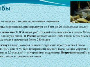 Рыбы Рыбы— надкласс водных позвоночных животных. Размеры современных рыб вар