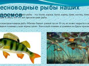 Пресноводные рыбы наших водоемов В наших водоемах обитают разные рыбы – это о