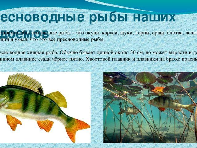 Пресноводные рыбы наших водоемов В наших водоемах обитают разные рыбы – это о...