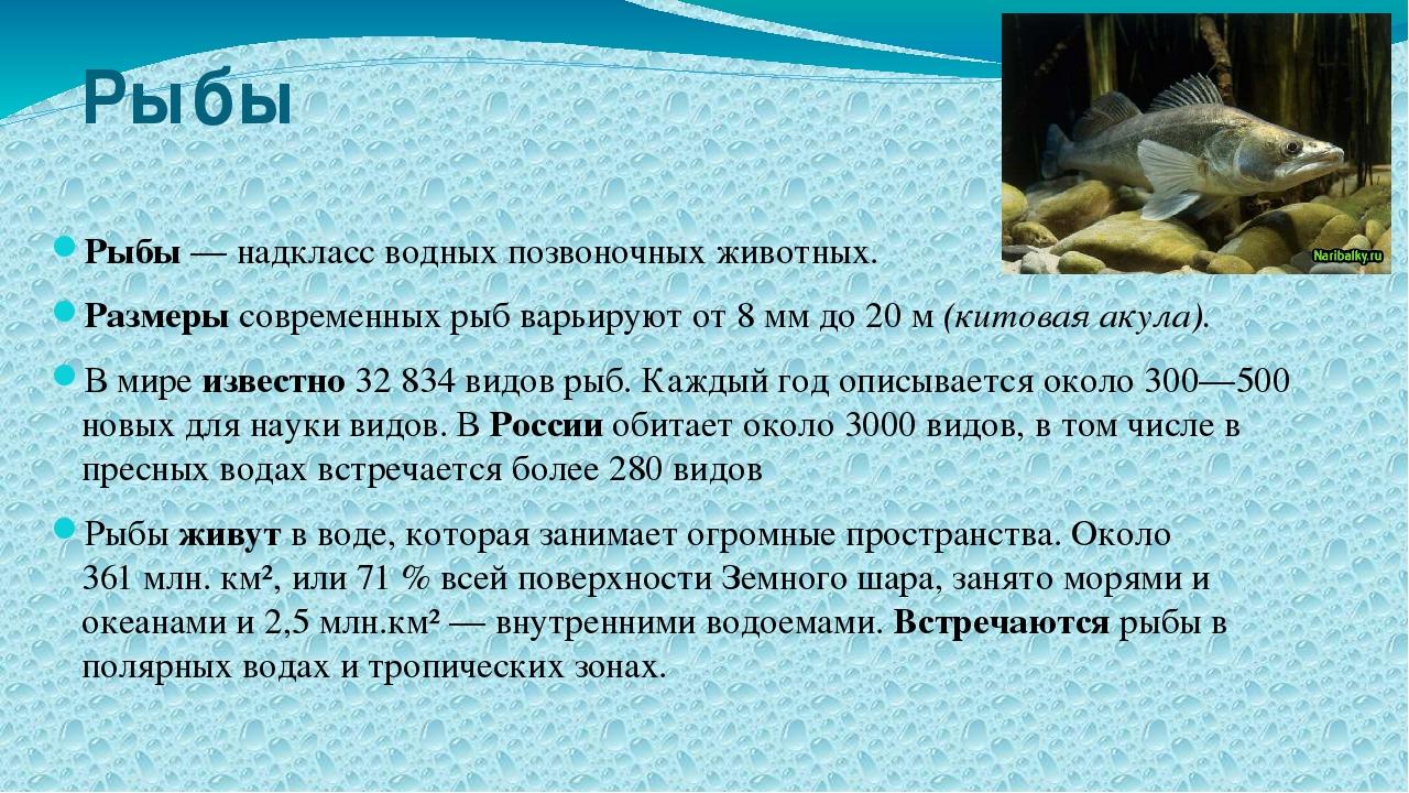 Рыбы Рыбы— надкласс водных позвоночных животных. Размеры современных рыб вар...