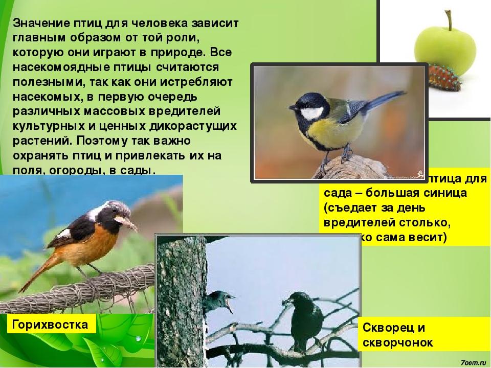 валют банках роль птиц в природе и для челтвека нас