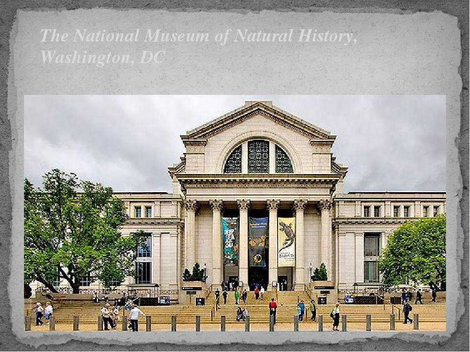 The National Museum of Natural History, Washington, DC