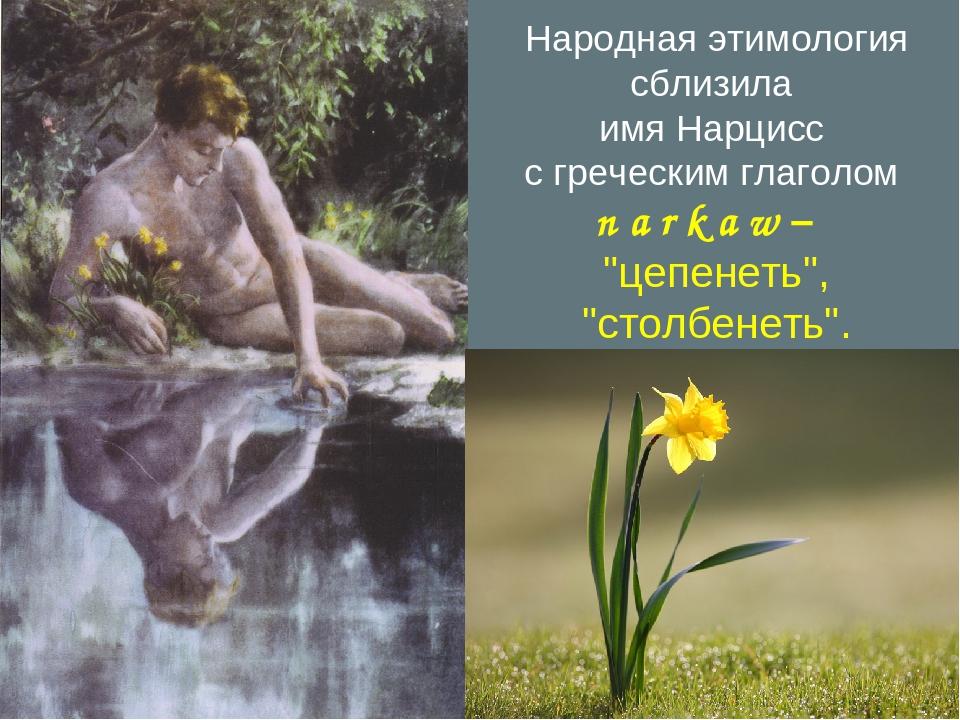 "Народная этимология сблизила имя Нарцисс с греческим глаголом n a r k a w – ""..."