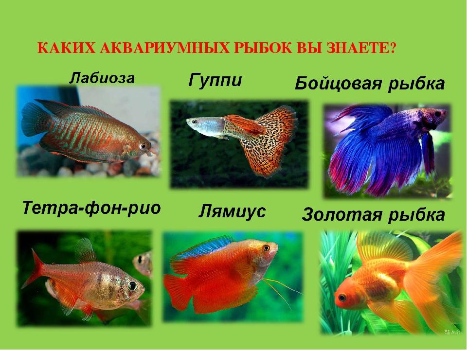 Все названия аквариумных рыбок с картинками если