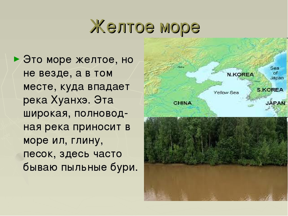Желтое море Это море желтое, но не везде, а в том месте, куда впадает река Ху...