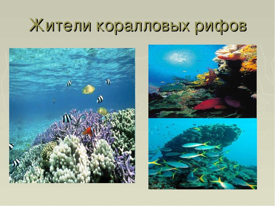 Жители коралловых рифов