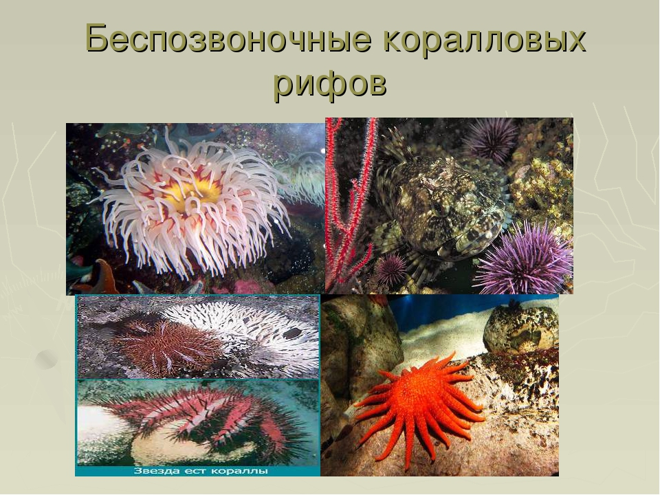 Беспозвоночные коралловых рифов
