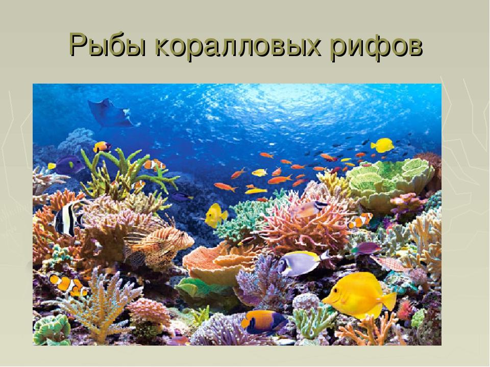 Рыбы коралловых рифов