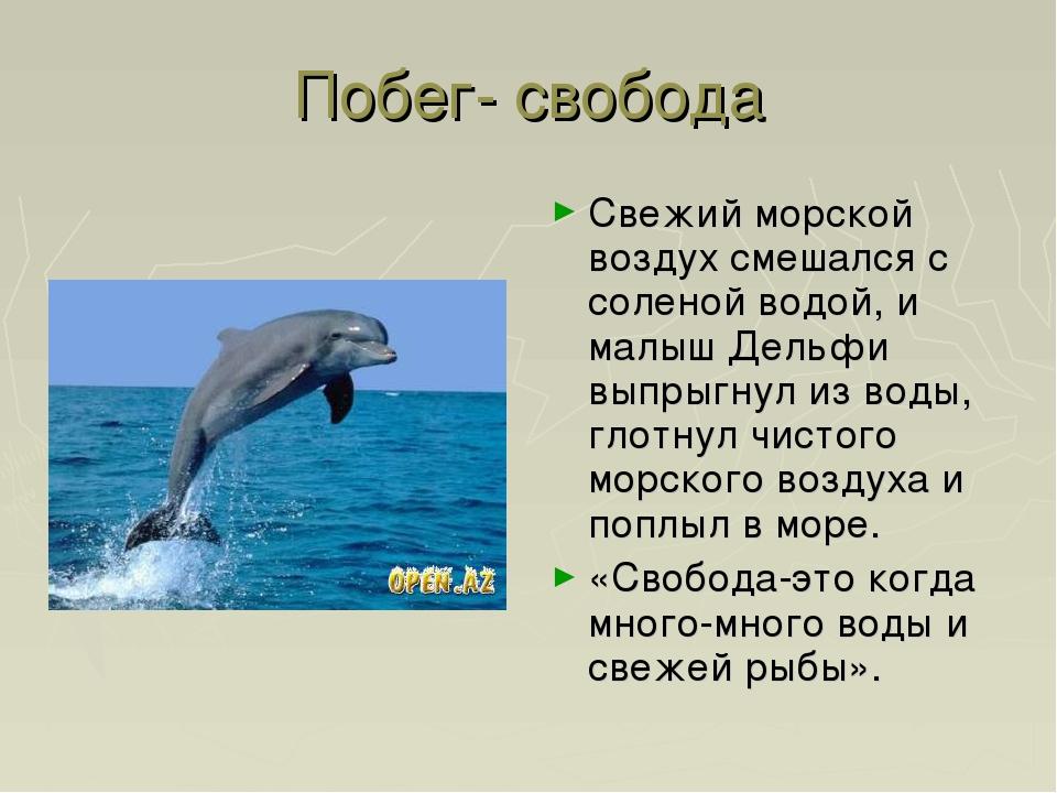Побег- свобода Свежий морской воздух смешался с соленой водой, и малыш Дельфи...