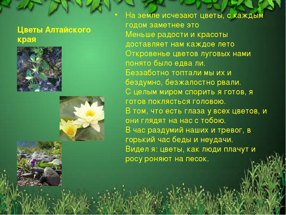 Растения и животные алтайского края картинки