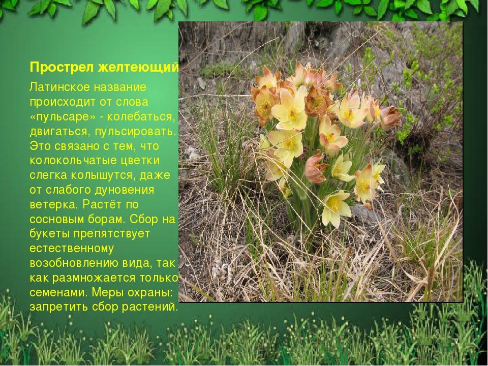 растения и животные алтайского края картинки клеить правильно точно