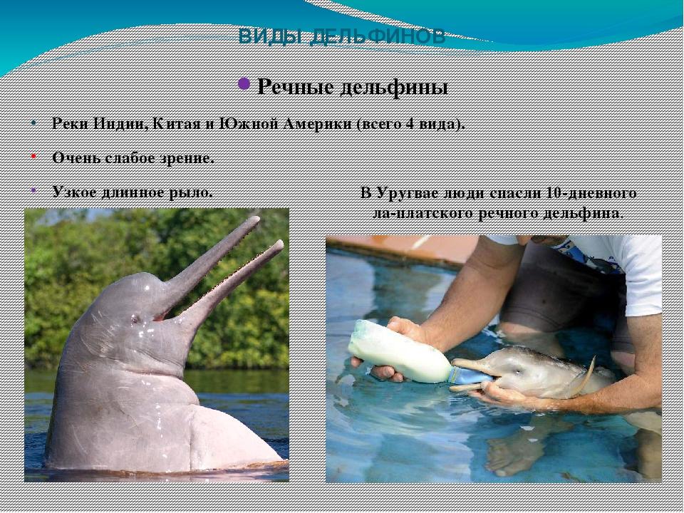 виды дельфинов список и фото монеты