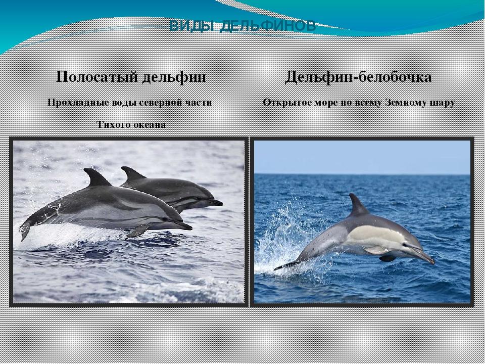 виды дельфинов список и фото законность
