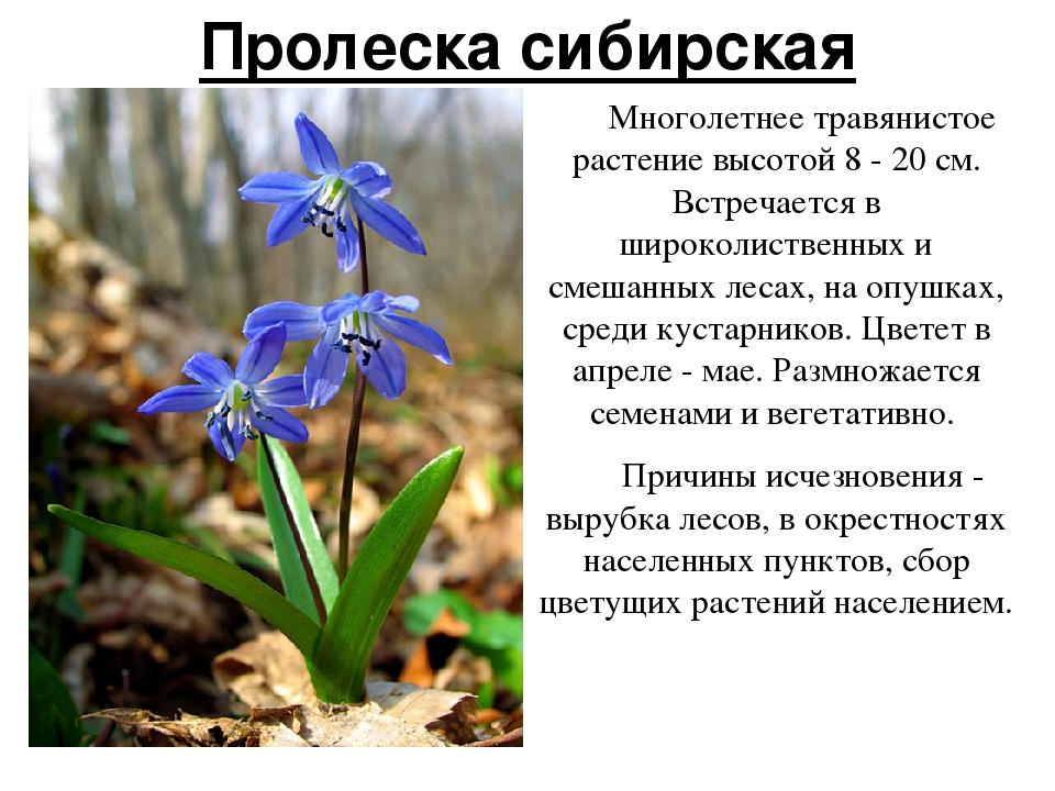 Вымершие растения с картинками