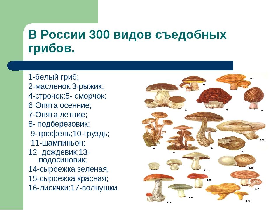 классификация грибов по съедобности с фото таких ненасытных