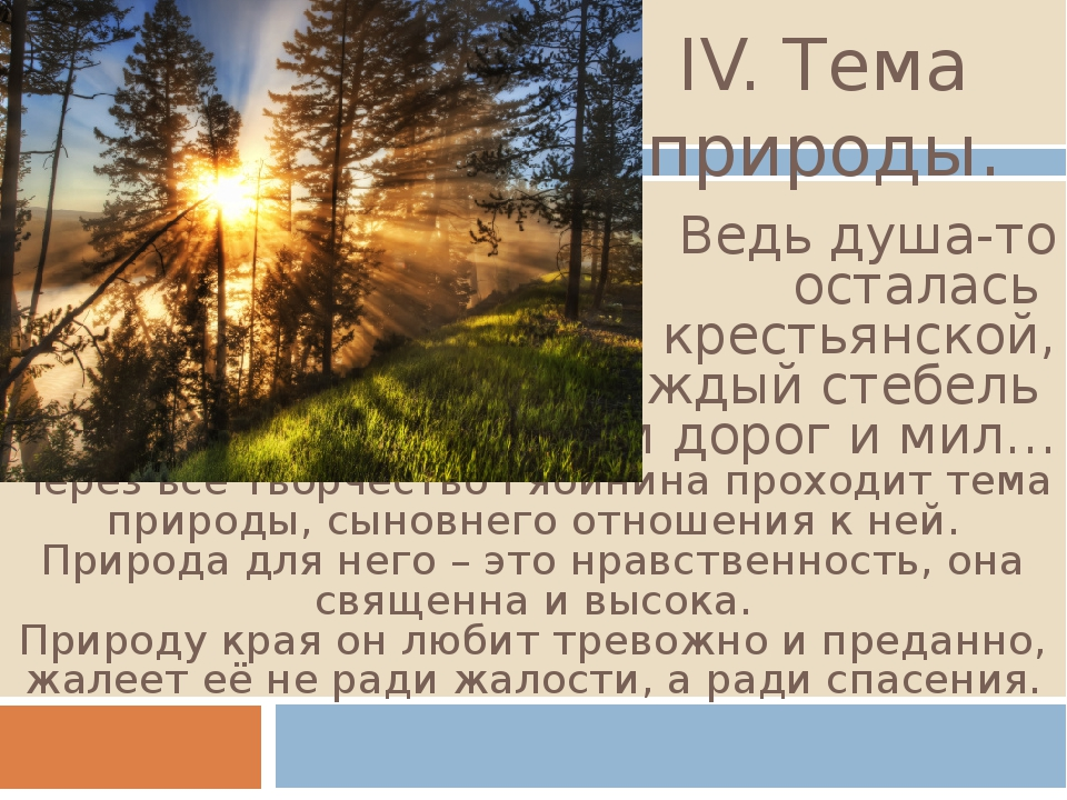 IV. Тема природы. Ведь душа-то осталась крестьянской, Каждый стебель нам доро...