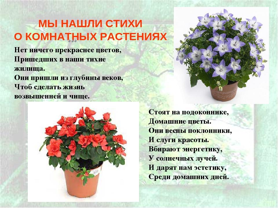стихи к подарку цветок в горшке на день рождения
