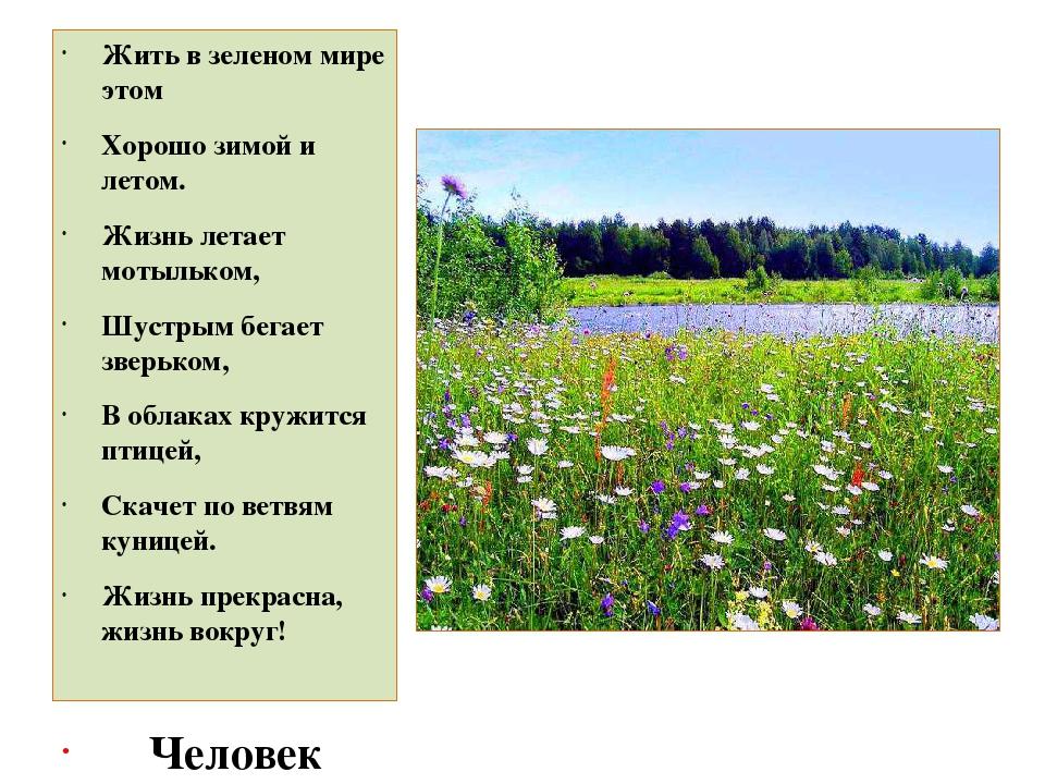 Жить в зеленом мире этом Хорошо зимой и летом. Жизнь летает мотыльком, Шустр...