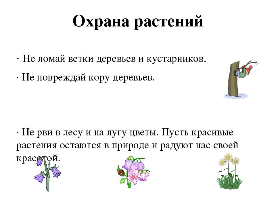 Охрана растений ∙ Не ломай ветки деревьев и кустарников. ∙ Не повреждай кору...