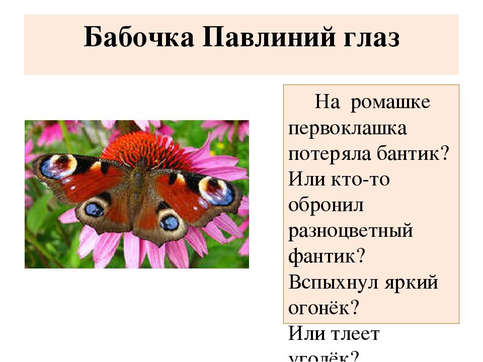 Бабочка Павлиний глаз На ромашке первоклашка потеряла бантик? Или кто-то об...