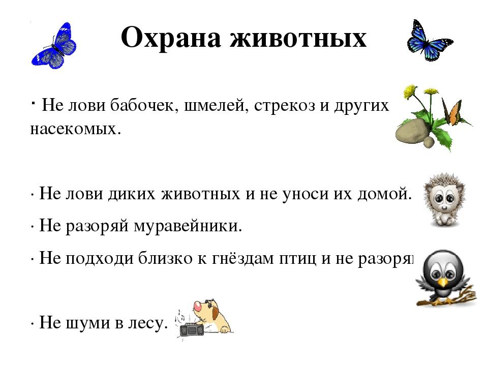 Охрана животных ∙ Не лови бабочек, шмелей, стрекоз и других насекомых. ∙ Не л...