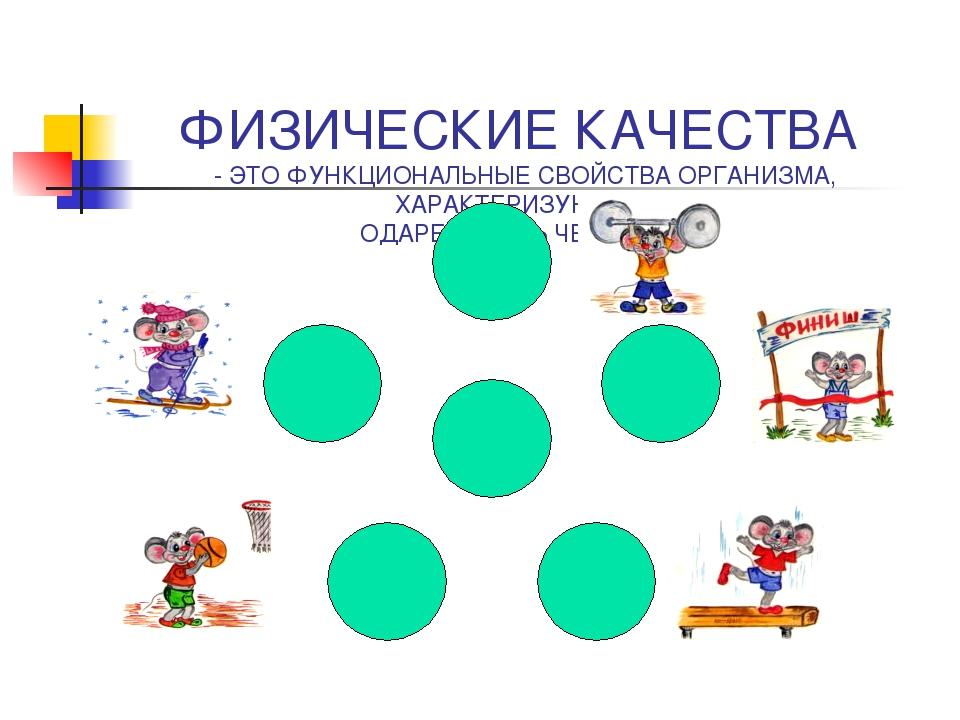 Презентация по физической культуре Физические качества  слайда 3 ФИЗИЧЕСКИЕ КАЧЕСТВА ЭТО ФУНКЦИОНАЛЬНЫЕ СВОЙСТВА ОРГАНИЗМА ХАРАКТЕРИЗУЮЩИЕ