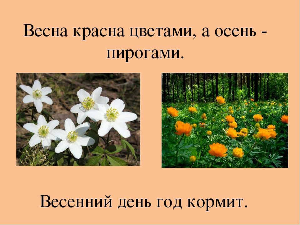 Весна красна цветами, а осень - пирогами. Весенний день год кормит.