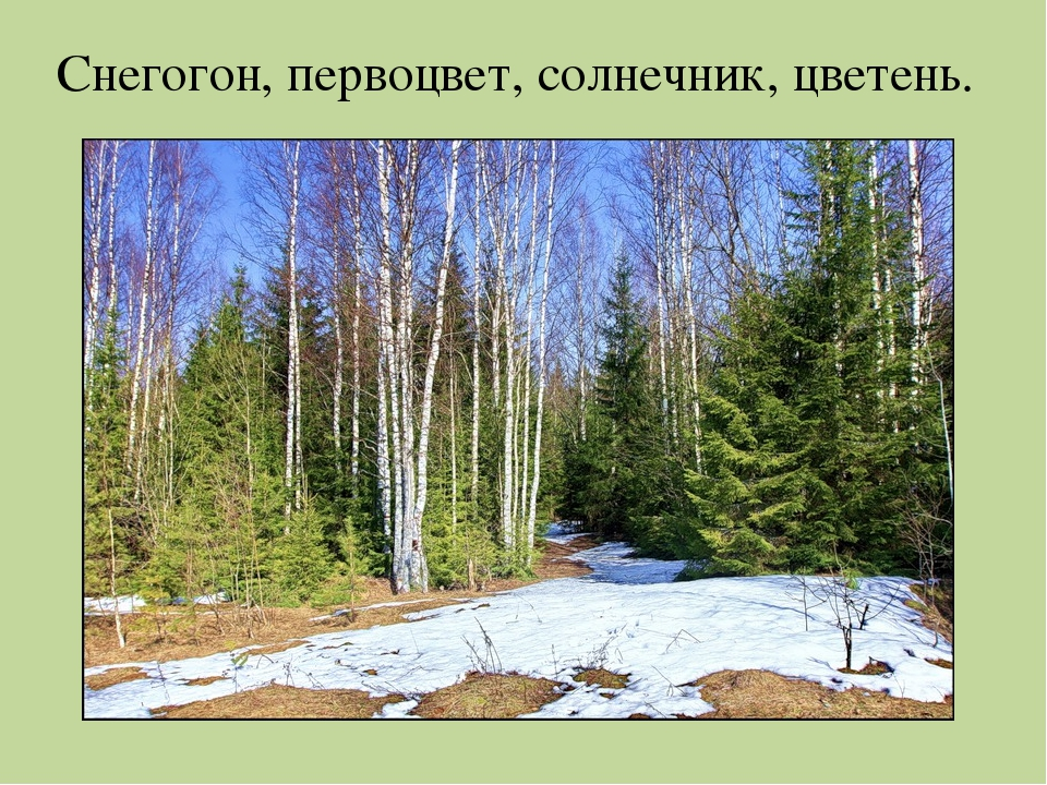 Снегогон, первоцвет, солнечник, цветень.