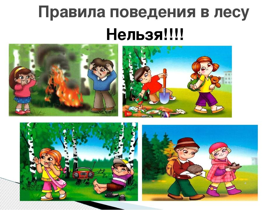 Картинки поведения детей в лесу