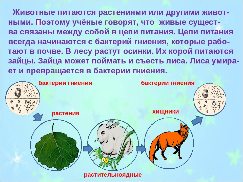 Животные питаются растениями или другими живот- ными. Поэтому учёные говорят...