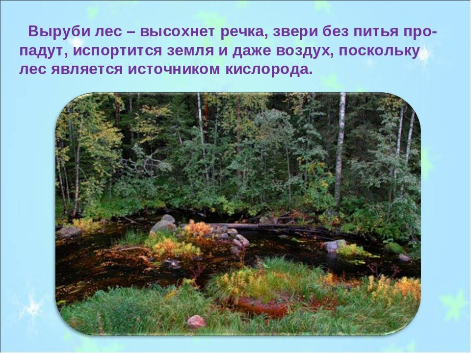 Выруби лес – высохнет речка, звери без питья про-падут, испортится земля и д...