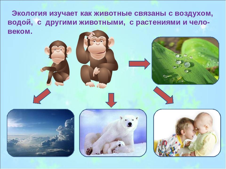Экология изучает как животные связаны с воздухом, водой, с другими животными...