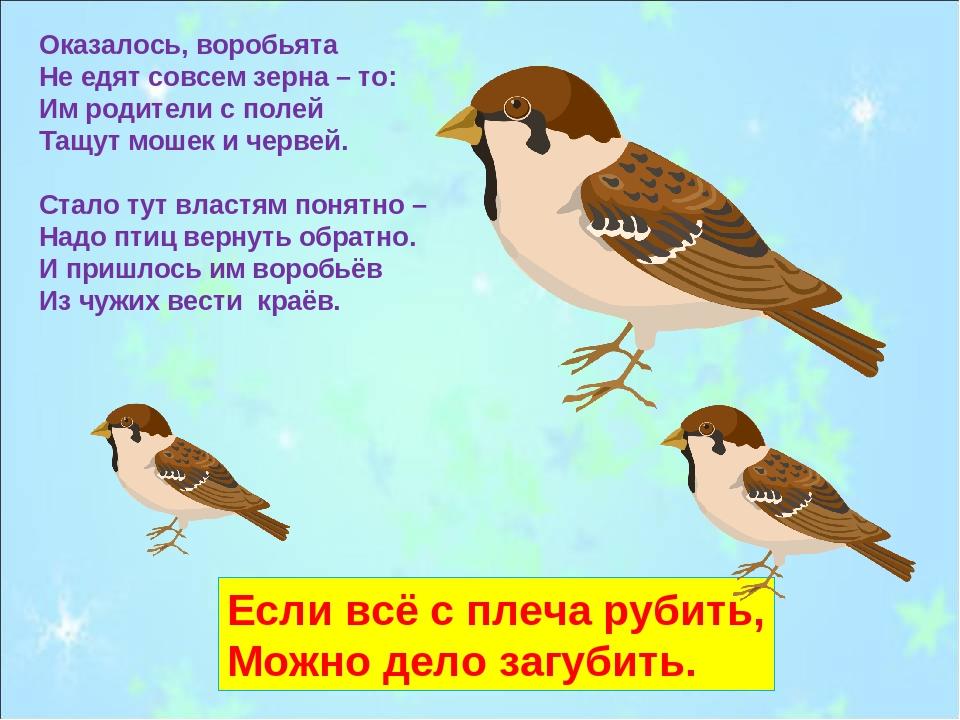 Оказалось, воробьята Не едят совсем зерна – то: Им родители с полей Тащут мош...