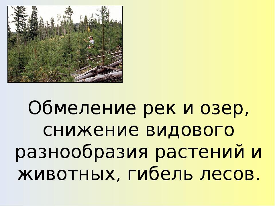 Обмеление рек и озер, снижение видового разнообразия растений и животных, гиб...