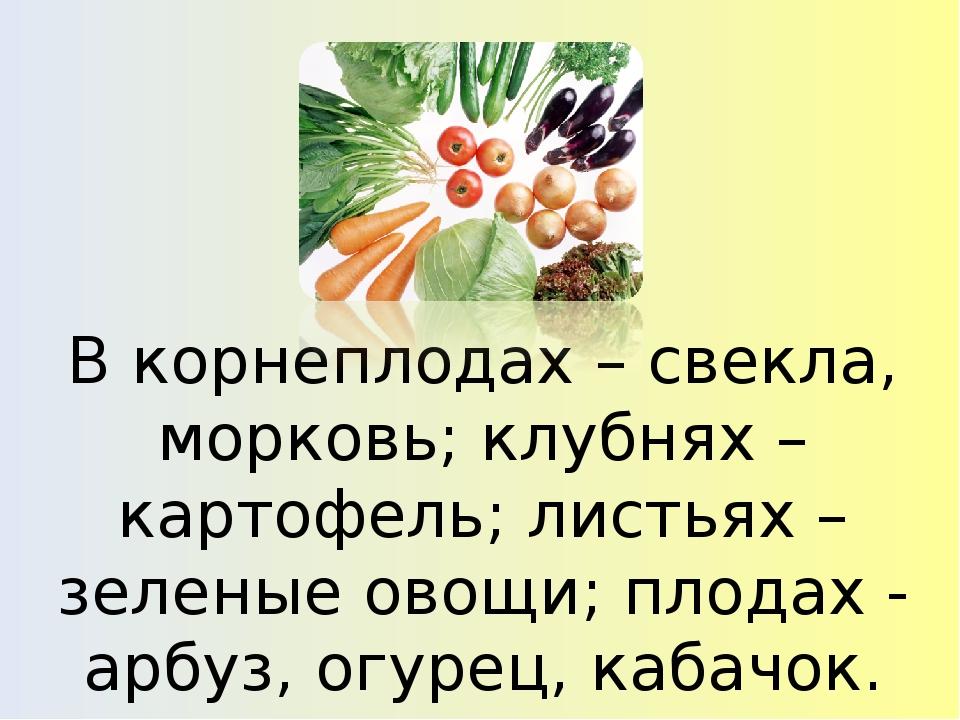 В корнеплодах – свекла, морковь; клубнях – картофель; листьях – зеленые овощи...