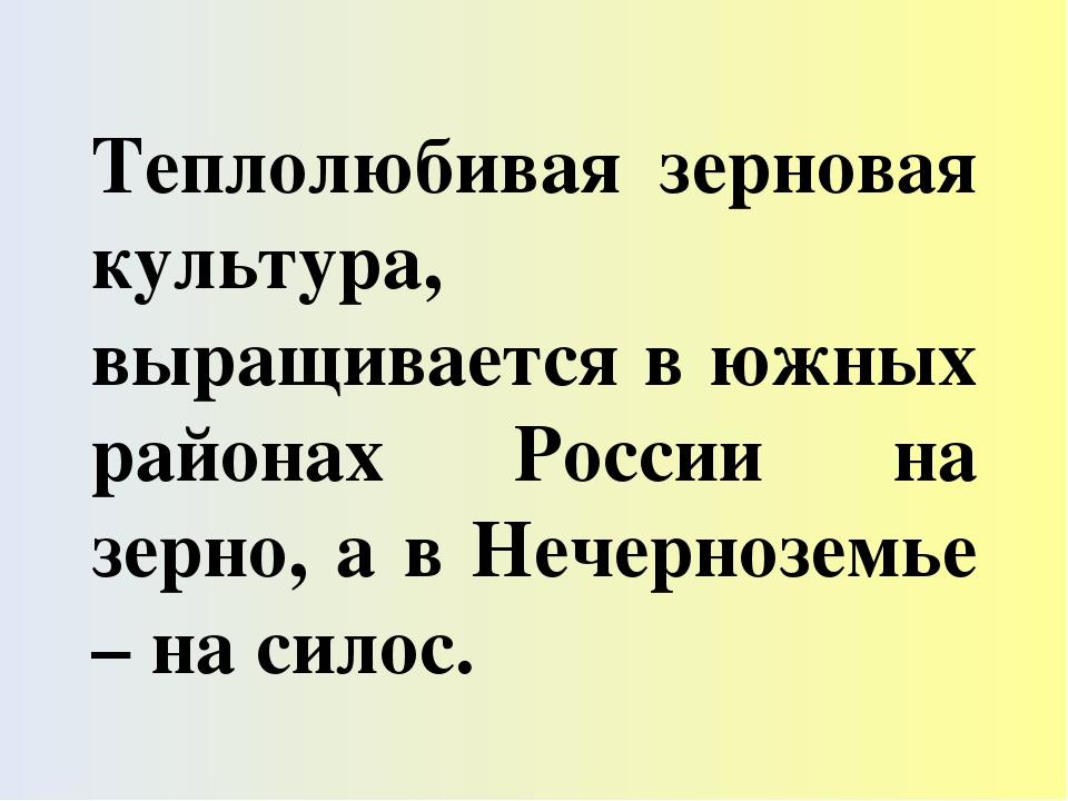 Теплолюбивая зерновая культура, выращивается в южных районах России на зерно,...