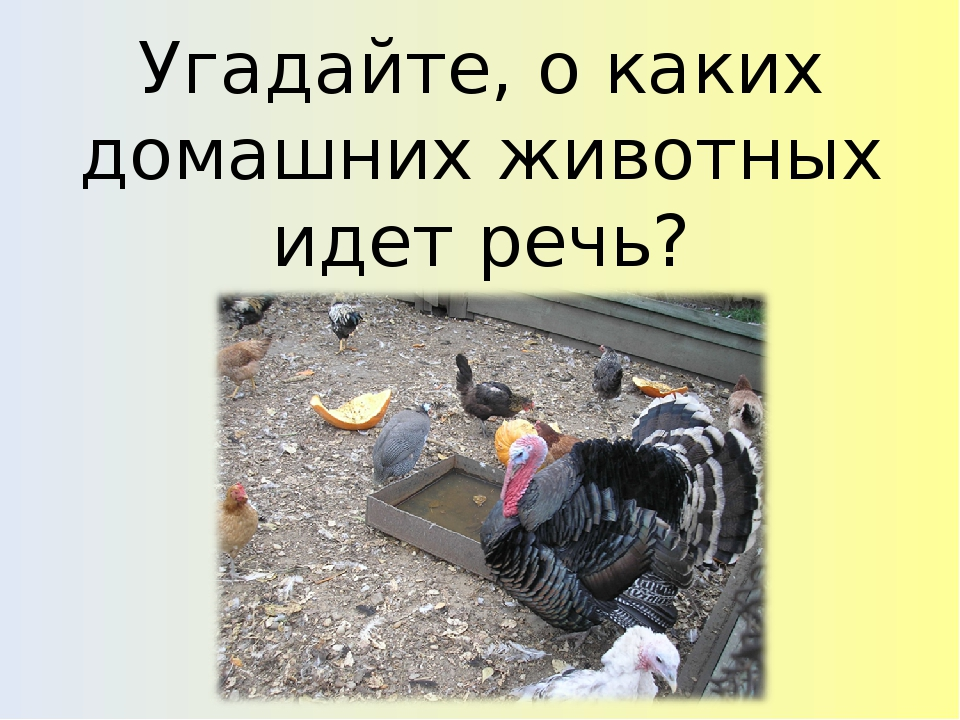 Угадайте, о каких домашних животных идет речь?